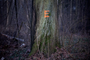 E_tree